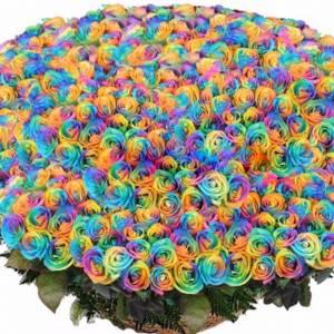 501 радужная роза, цветы в корзине R933
